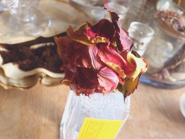 Flower Petal Flower Head Rose - Flower Fragility