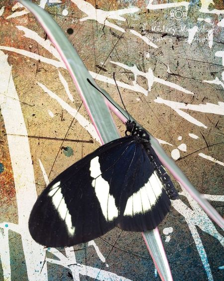 Butterfly Insect Photography Insect Blackandwhite Colors Nature Nature Photography Photographyart Art