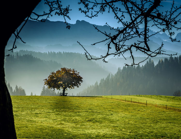 Beauty In Nature Day Field Grass Green Color Growth Landscape Mountain Nature No People Outdoors Rural Scene Scenics Sky Tranquil Scene Tranquility Tree
