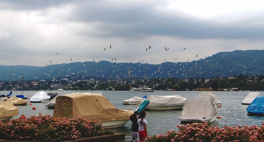 Zurich, Switzerland Zürich Traveling Visiting Cities Tourism Water Beauty In Nature Kids Neugierig Möwen See Lake