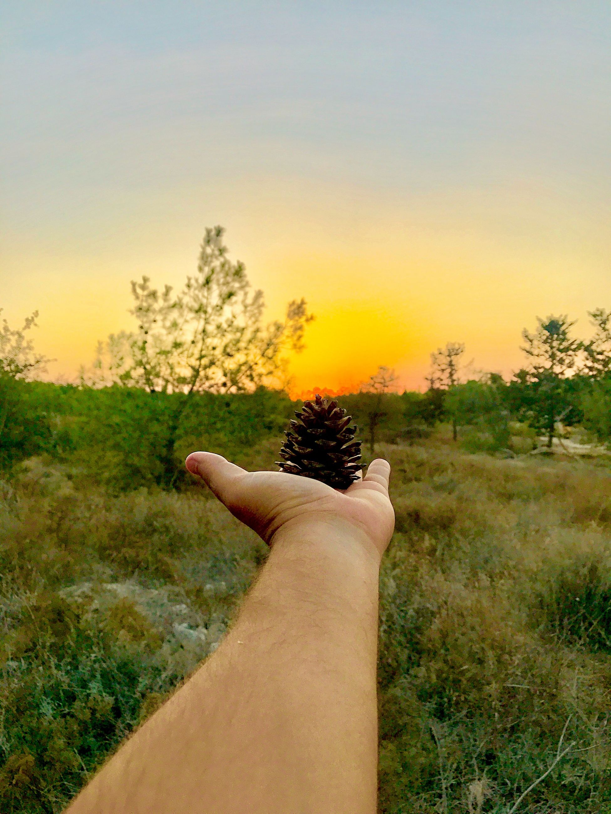 human hand, human body part, personal perspective, tree, one person, nature, sunset, real people, human finger, sky, plant, landscape, outdoors, grass, field, beauty in nature, scenics, men, clear sky, close-up, day, people