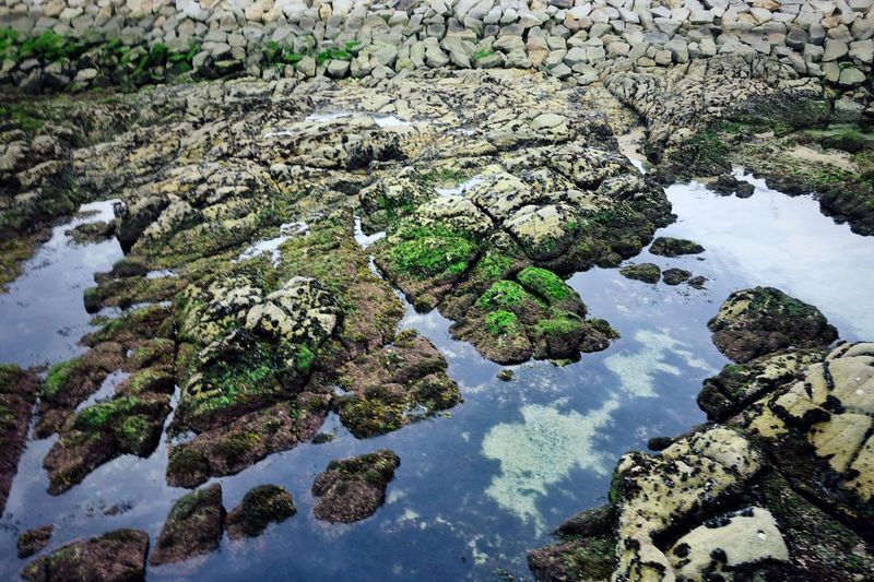 Low Tide Rock Formation Reflection Water Reflections Moss Moss & Lichen Seaweed Blue Green Textures and Surfaces Patterns In Nature Springtime Coruña SPAIN Atlantic Atlantic Ocean Green Nature Wildlife & Nature Seascape Tourism Oceanside Top View Water Lake Reflection Calm Ocean Countryside Coast Pebble Beach