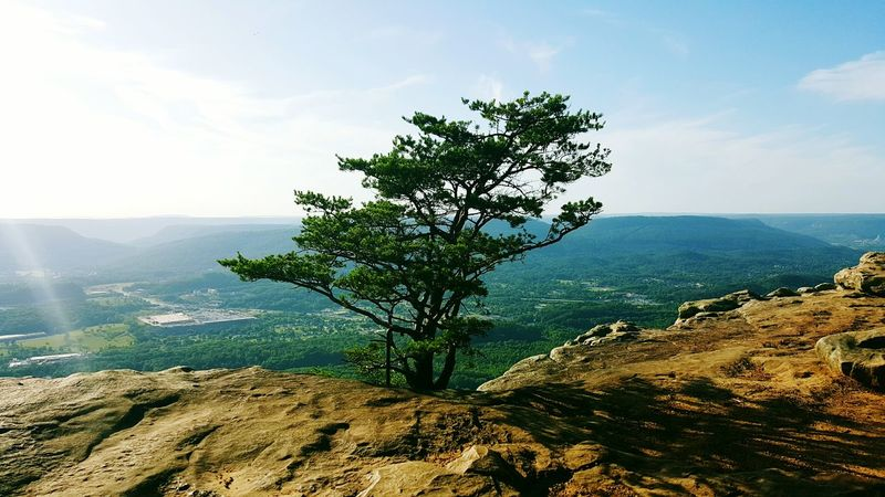 Creative Light And Shadow Lookout Mountain Tennessee Tree Topoftheworld