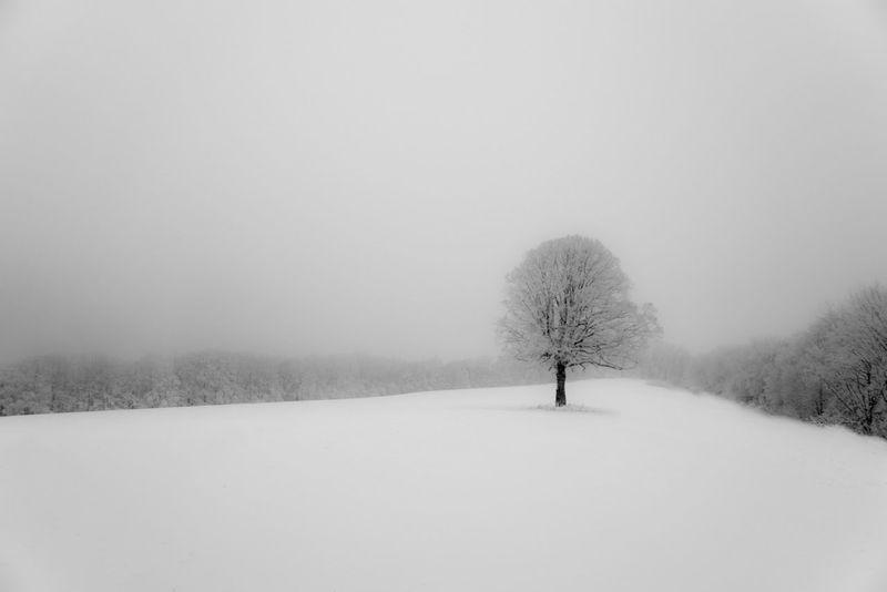 Blackandwhite Black And White Nature Nature_collection Winter Beautiful Nature Blackandwhite Photography Fog Nature Collection Black&white
