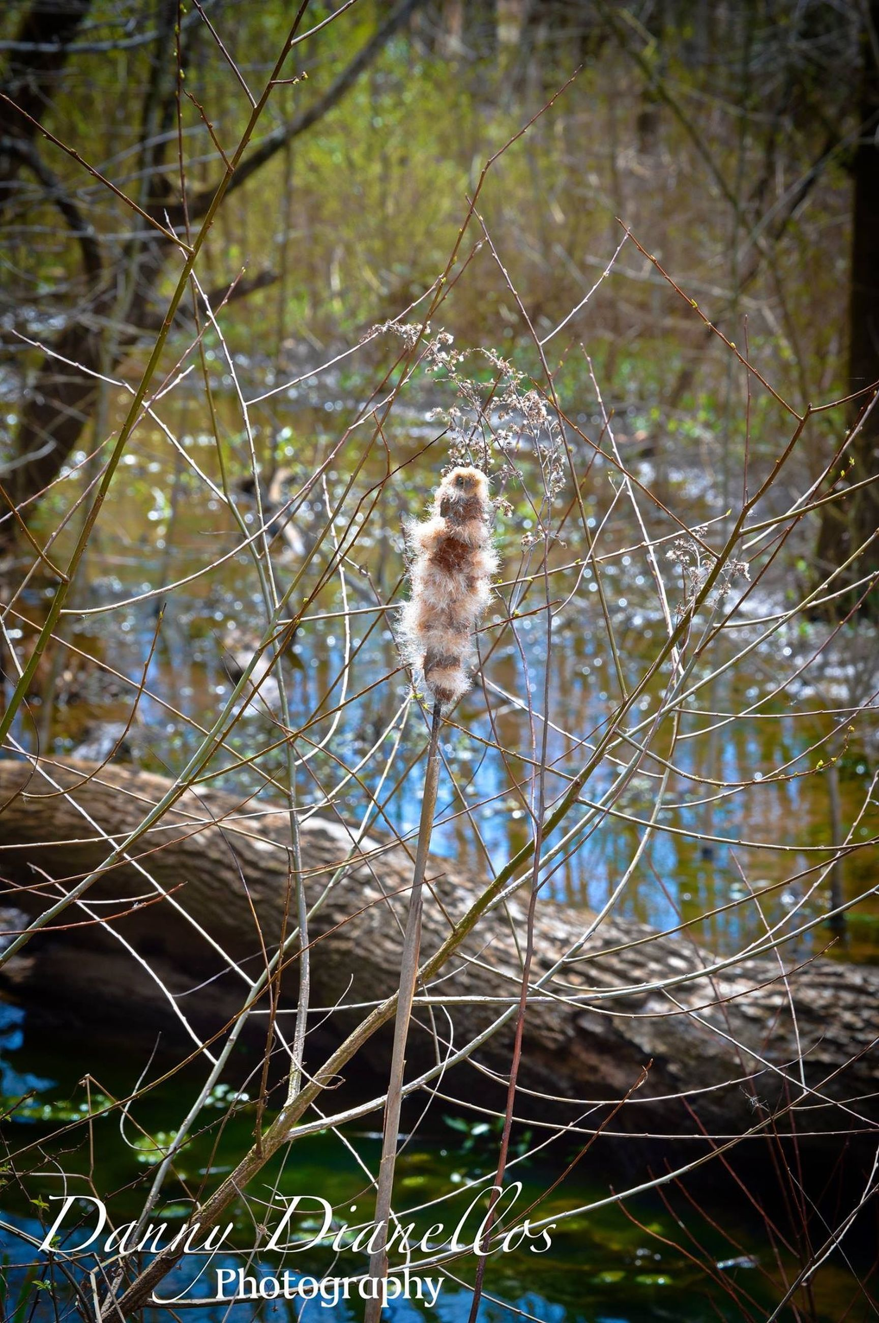 water, animal themes, one animal, animals in the wild, wildlife, lake, focus on foreground, nature, close-up, reflection, spider web, day, branch, outdoors, beauty in nature, drop, plant, forest, no people, grass
