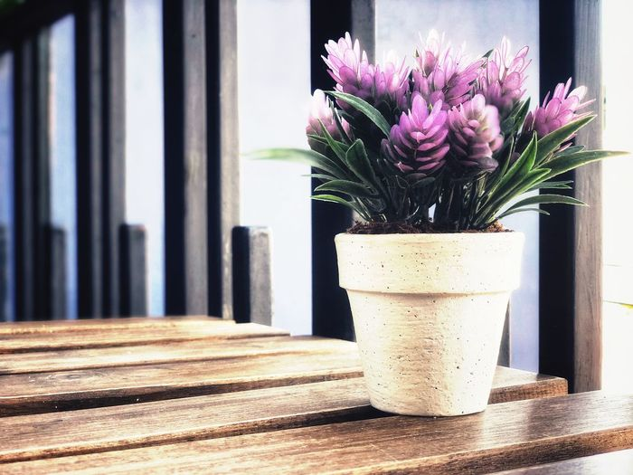 Close-up of potted flower vase on table