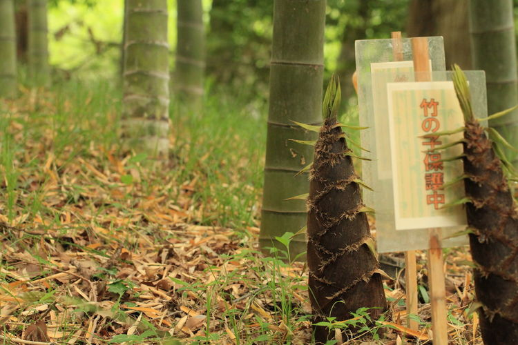 Bamboo 野草 Green Botany Tree Tree Trunk Forest Wood - Material Grass Close-up