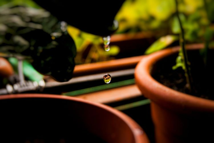 Drop. Close-up Drops Of Water 365project Photooftheday A700 Lateupload Yesterday
