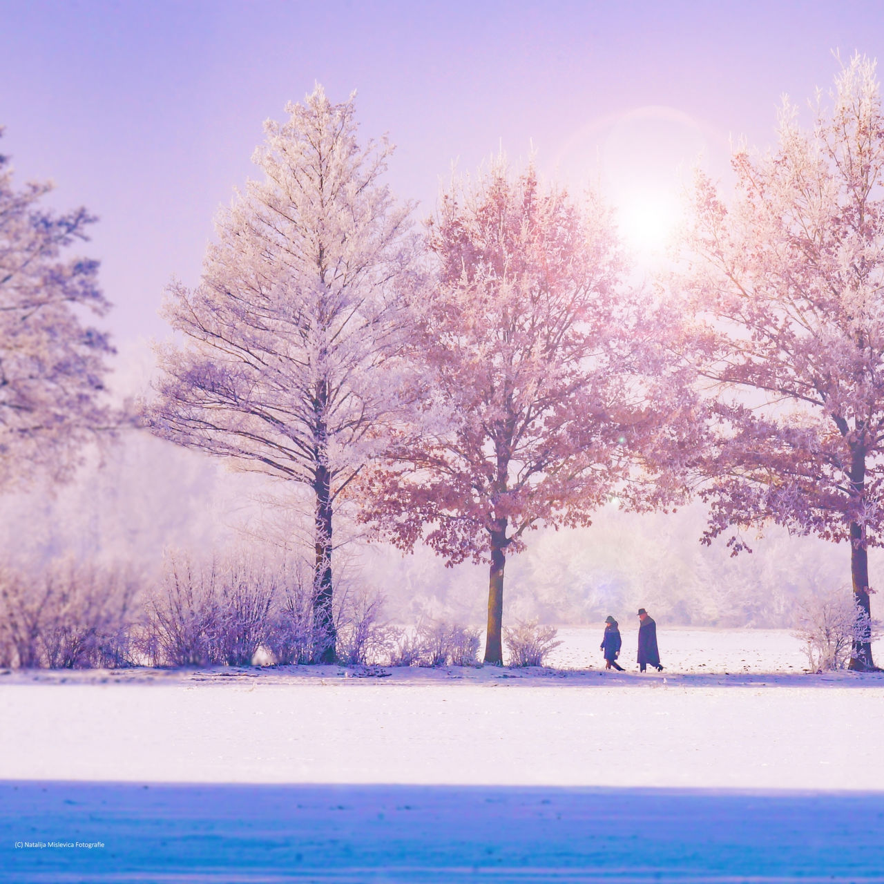 SCENIC VIEW OF TREES AGAINST SKY DURING WINTER