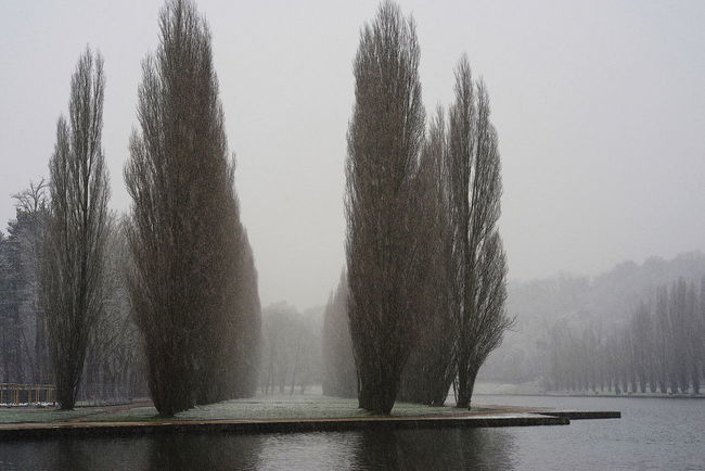 Bare Tree Cold Temperature Fog Foggy Nature No People Outdoors Park Poplars Snow Covered Tree Water Winter