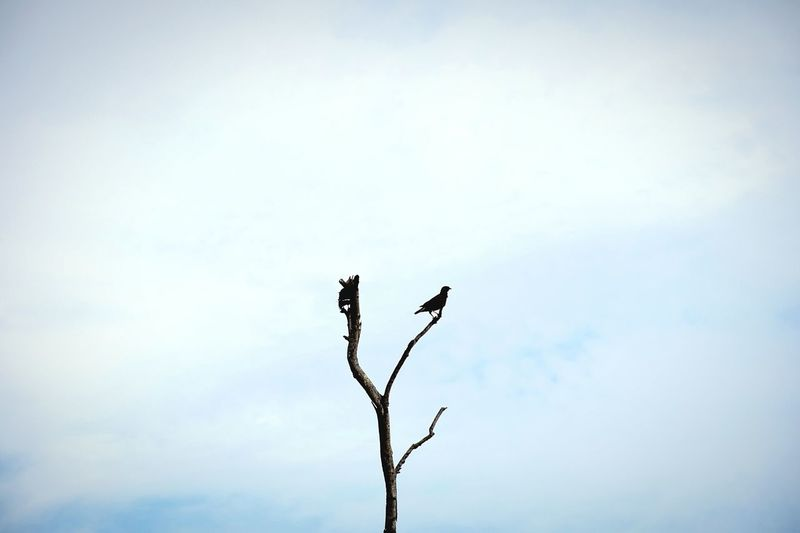 Low angle view of silhouette bird on bare tree