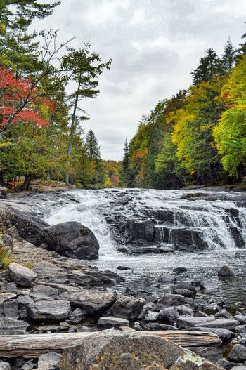 Tree Nature Beauty In Nature Stream - Flowing Water My Best Photo 2016 Autumn Collection 43 Golden Moments Natural Parkland Share Your Adventure Nature At Work Autumn 2016 Autumn Colours Adirondack Mountains Nature On Your Doorstep My View Right Now Beauty In Nature Autumn