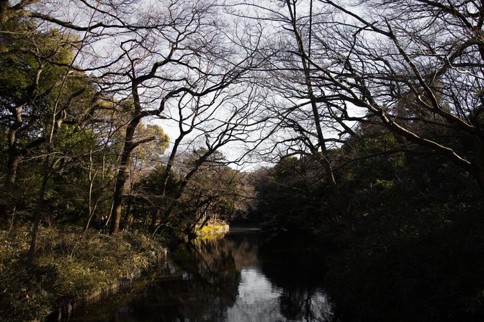 Somewhere in 🇯🇵 Japan Landscape Places Travel Tree Low Angle View Nature Branch Growth Beauty In Nature No People Day Sky Tranquility Outdoors Scenics Water