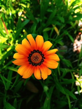 Ethereal Nature Outdoors Smartphonephotography Plant Petals Orange Intothewildlife