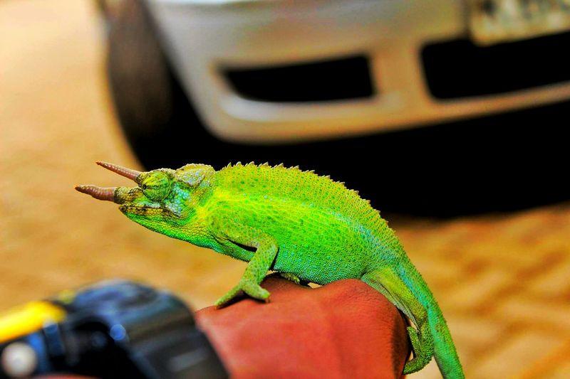 Chameleon Vibrant Color Flare