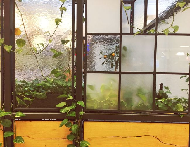 Indoors  Growth Potted Plant Window Plant Close-up Day Green Color Nature Focus On Foreground Green Window Frame Freshness No People Geometric Shape Berlin Urban Lifestyle Shopping Mall The Q Streetphotography City Life Texture Textures And Surfaces Vintage Vintage Style