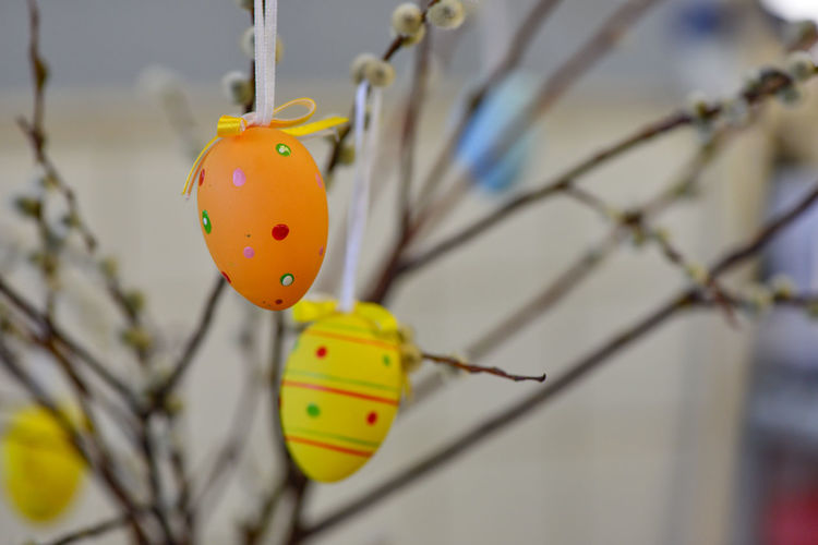 Easter eggs hanging from the willow branches. Easter decorations. Easter holidays. Easter Easter Ready Easter Eggs Traditions Branch Close-up Decoration Decorations Eggs Festivity Ideas Spring Willow Willow Catkins