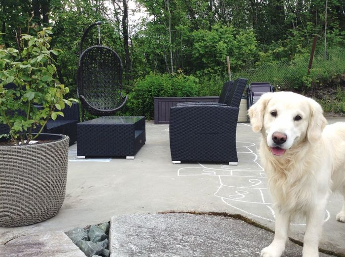 Where our loud summer nights outdoors shall be taken place. Outdoors Summer I Love My Dog Dog Texas Enjoying Life Furniture Outside Summer Nights Summertime