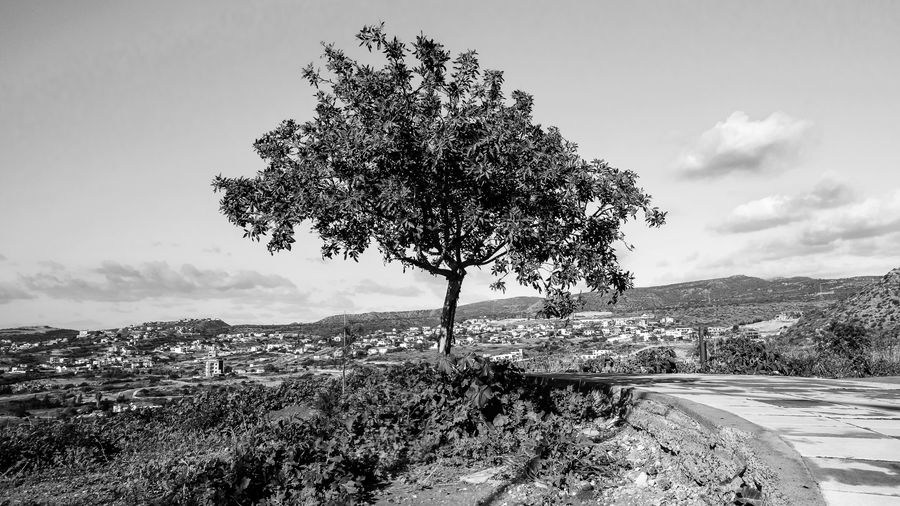 Plant Tree Sky Beauty In Nature Nature Environment Landscape Tranquility Tranquil Scene Mountain Day Growth No People Scenics - Nature Road Cloud - Sky Field Outdoors Land Non-urban Scene Blackandwhite Black And White EyeEm EyeEm Best Shots EyeEm Selects