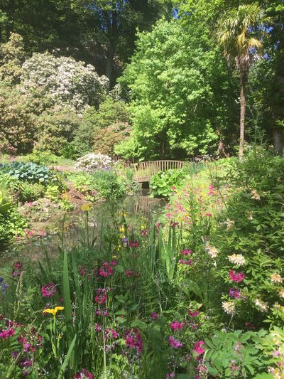 Minterne Gardens Bridge In The Nature Monet Style Plant Growth Flower Flowering Plant Beauty In Nature Day Nature