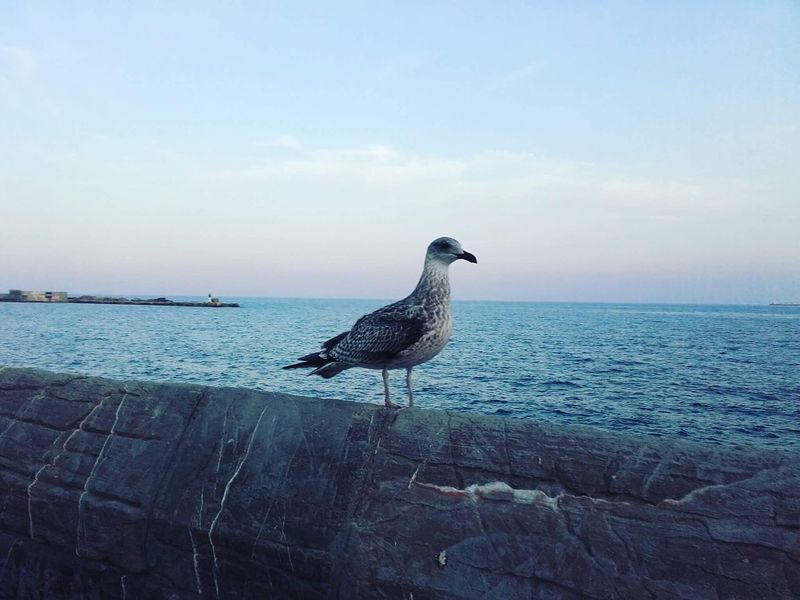 Marseillan Plage Plage 🌴 Soleil Oiseaux Travel Destinations Arid Climate No People Beauty In Nature Tranquility Outdoors Day Nature The Week On EyeEm EyeEmNewHere Pet Portraits