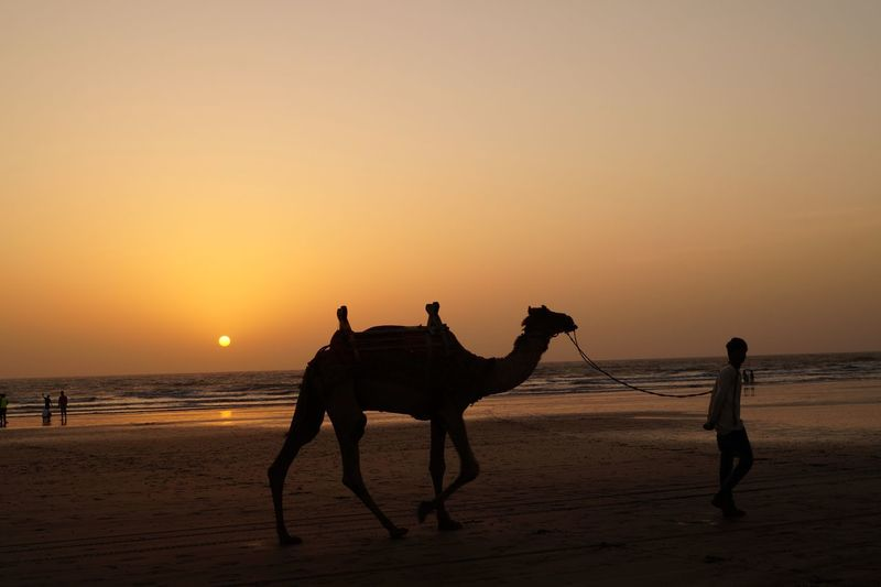 🐫 camel ride 🐫 Camel Happiness Peace Indian Culture  Togetherness Pathway Path Beachphotography Reachhigh Beauty In Nature Sand Dune Sunset Desert Sand Silhouette Sun Beach Sky Camel