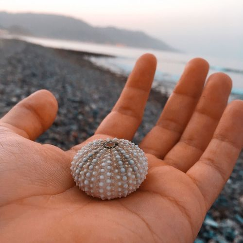 Close-up of human hand holding sea urchin at beach
