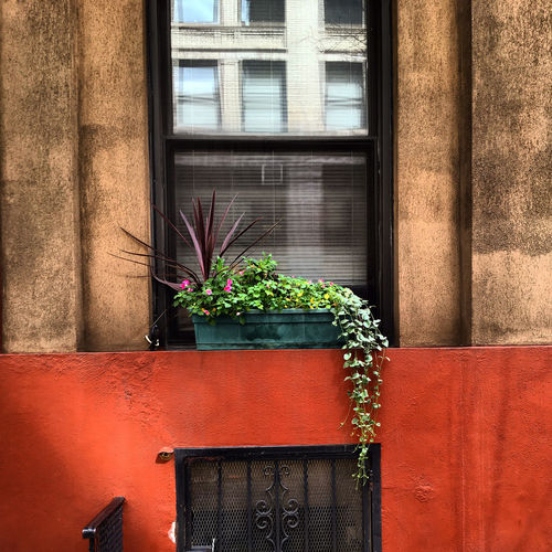 August in Chelsea Architecture Brick Wall Building Building Exterior Built Structure Close-up Day Green Color Growth Nature No People Outdoors Plant Potted Plant Residential Building Residential Structure Wall Window Window Reflection Window Sill
