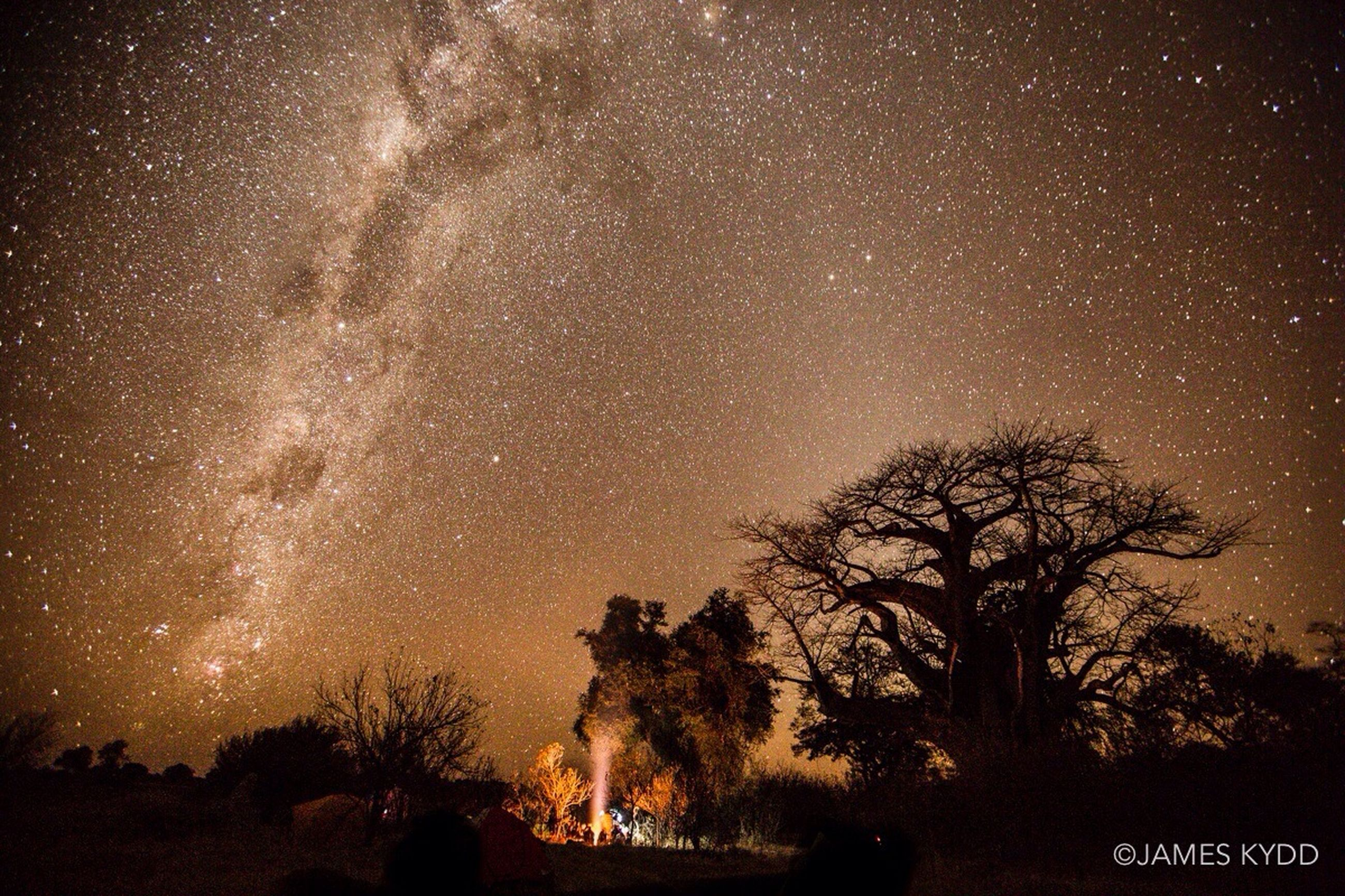 night, tree, star - space, silhouette, star field, low angle view, scenics, sky, illuminated, beauty in nature, galaxy, tranquil scene, astronomy, tranquility, star, nature, dark, milky way, idyllic, outdoors