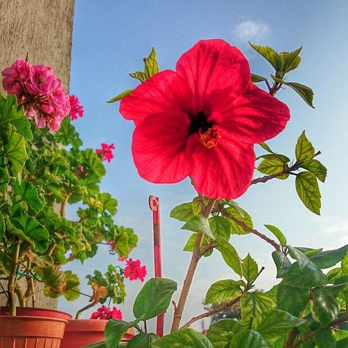 Çok mu renkli olduk bugün ne 😕 Color Flowers Life BirazHDR karanlıklaraydınlağaHDRilekavuşur yıl2014ekim18