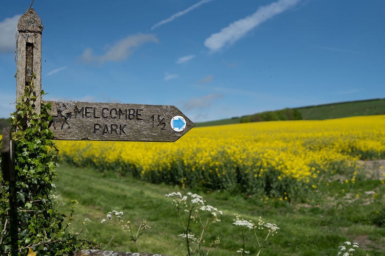 A sign to Melcombe Park in the heart of the Dorset countryside. Plant Field Nature Land Communication Yellow Landscape Western Script Sign Sky No People Text Day Beauty In Nature Growth Flower Environment Grass Flowering Plant Tranquil Scene Outdoors Dorset British Countryside Rapeseed