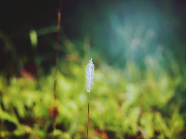 My Favorite Place Botany Non-urban Scene Ice Age Beauty In Nature Plant Macro