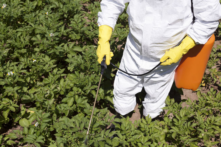 Midsection of farmer spraying pesticide on plants