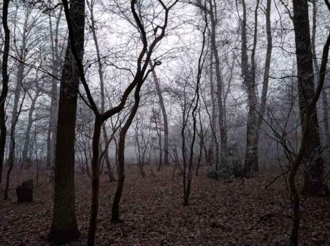Tree Nature Bare Tree Beauty In Nature Tranquility Forest Tree Trunk Landscape Scenics Tranquil Scene No People Fog Branch Outdoors Day Sky