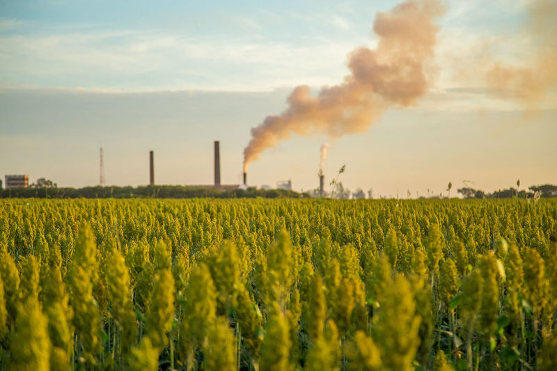 Agriculture Crop  Day Emitting Factory Field Growth Industry Landscape Nature No People Oilseed Rape Outdoors Rural Scene Sky Smoke - Physical Structure Smoke Stack Yellow