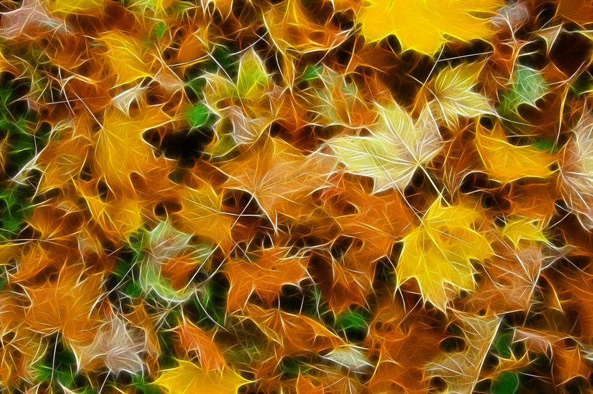 Fractal Autumn Leaves Autumn colors Autumn Leaves Abundance Autumn Backgrounds Beauty In Nature Close-up Day Fractal Full Frame Leaf Leaves Multi Colored Natural Pattern Nature No People Orange Color Outdoors Pattern Plant Plant Part Yellow