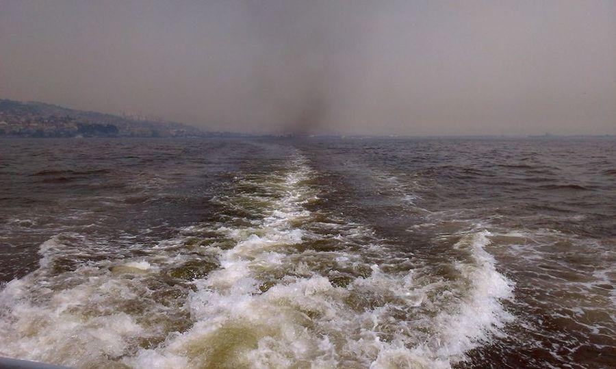 #leaves #pollution #sea Foam #TURKEY/Kocaeli