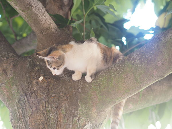 Cat Cat In Nature Cat Lovers Cat On Tree Catphotography Cats Cat♡ Kitten Kitten In Nature Kitten In The Tree Kitten On A Tree Nature Cat SPAIN