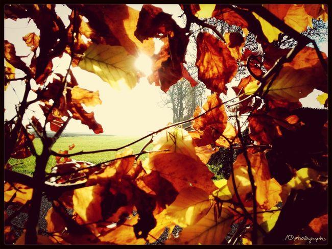 Beautiful Nature Beautiful Colours.... EyeEm Best Shots EyeEm Nature Lover