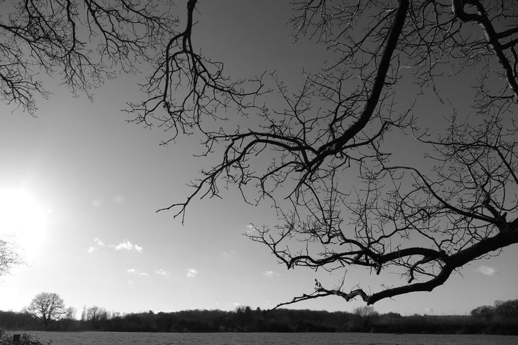 Lanscape #trees #sunset #wood #winter #sky Out & About With Nature Nature Photography Best View Creative Light And Shadow Blackandwhite Landscape_photography Tree Silhouette Light And Shadow