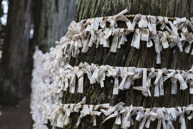 Wet Fortune paper wrapped around a huge tree trunk in a temple in Takayama, Japan Japan Japanese  Shrine Spirituality Temples Belief Buddhism Cold Temperature Day Focus On Foreground Fortune Papers Hanging Nature No People Outdoors Paper Religion Shintu Tied Tied Up Tree Tree Trunk Wood Wood - Material Wrapped
