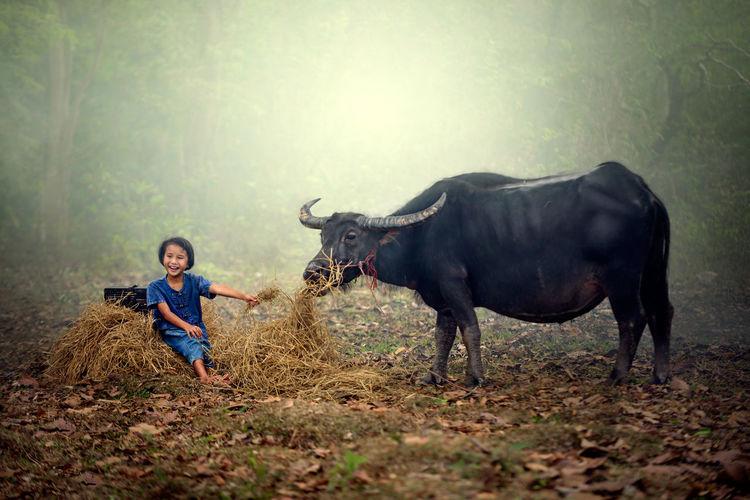 Cheerful girl feeding hay to buffalo at farm