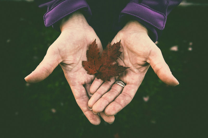 Cropped Hand Holding Autumn Maple Leaf