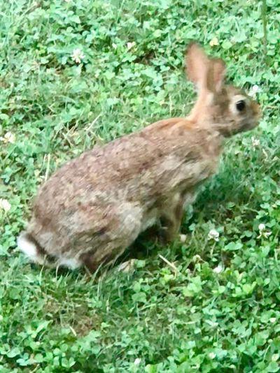 Jumping rabbit Animal Themes Animal One Animal Grass Vertebrate Mammal Animals In The Wild Nature Animal Wildlife