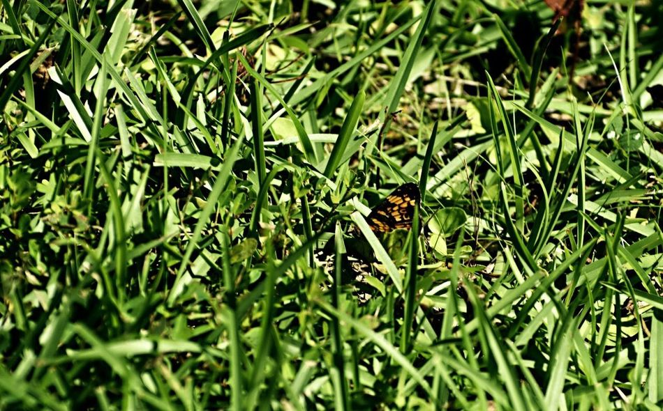 I spy a butterfly Insect Nature Grass No People Outdoors