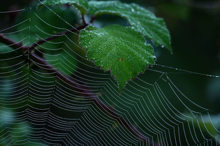 Close-up of cobweb against leaves