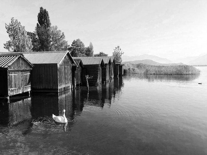 Busskirch Blach&white Black And White Animal Swan Water Sky Nature Tree Waterfront Day Beauty In Nature Architecture Built Structure Outdoors Lake No People