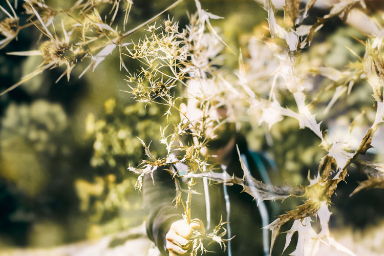 Double Exposure Beauty In Nature Close-up Day Flower Fragility Growth Nature No People Outdoors Plant