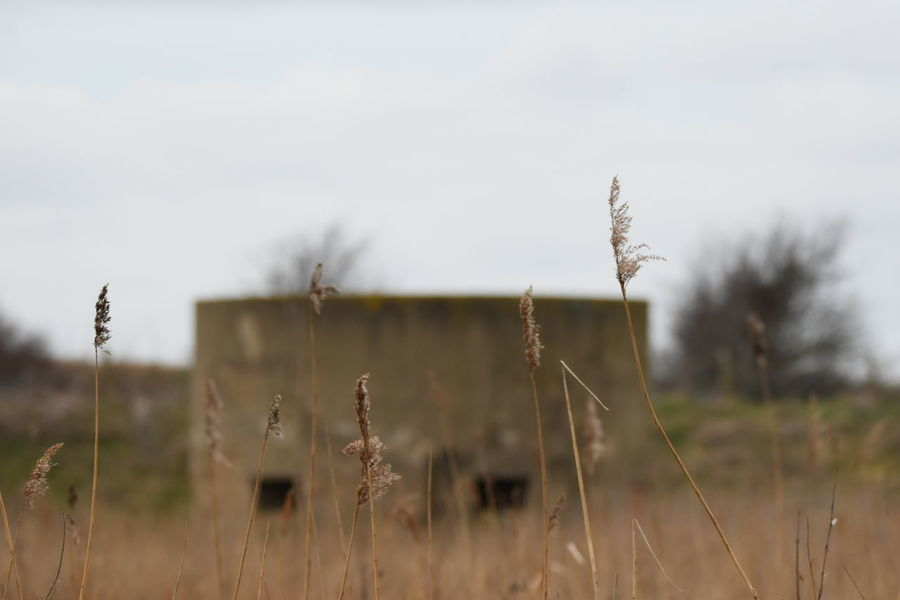 ww1 submarine observation tower_ rainham marsh Nature Plant Outdoors No People Reed - Grass Family Rural Scene Day Landscape Sky Nature Reserve Sigma150-600c NikonD5500 Field Timothy Grass Wheat Grass