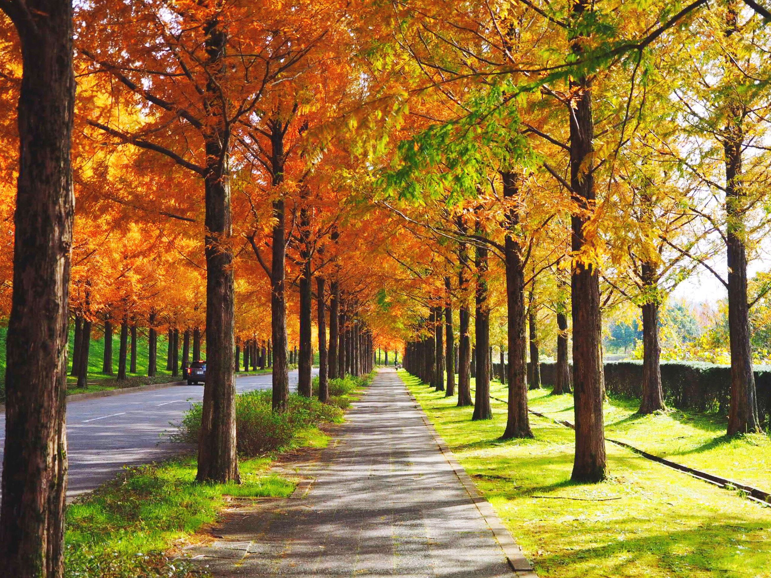 tree, nature, beauty in nature, autumn, tranquil scene, scenics, tranquility, outdoors, leaf, sunlight, growth, no people, day